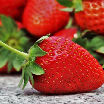 Visoki prinos ploda jagode uz primjenu huminskih kiselina u fertirigaciji